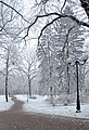 Маріїнський парк взимку 02.jpg