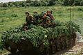 На Дніпропетровщині десантники «захопили» міст, форсували водну перешкоду та розпочали «рейдові дії» (27074148260).jpg