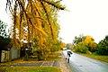 Осень в Подмосковье - panoramio (1).jpg