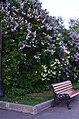 Парк имени Горького в Москве. Фото 49.jpg