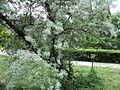 Парк шума Гази Баба во мај (127).JPG