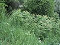 Парк шума Гази Баба во мај (95).JPG