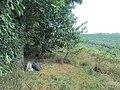 Польова розвідка, лани навколо с.Івангород, Христинівського району.jpg