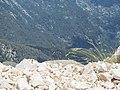Сила жизни. 2365 м. над уровнем моря. Кемер. Турция. Июнь 2012 - panoramio.jpg