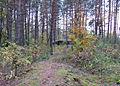 Стежка до ДОТу № 129 - panoramio.jpg
