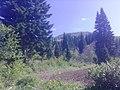 Топиха - panoramio.jpg