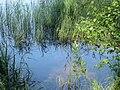 Трава в воде.jpg