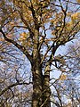 Украина, Киев - Голосеевский лес 137.jpg