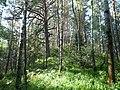 Холм в лесу - panoramio.jpg