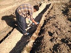 رود کشکان خشک شد، تلاش کشاورزان برای جلوگیری از خشک شدن بوته های خیار، آبیاری با سطل و بطری آب.jpg