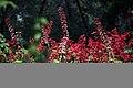 عکس از گلها و گیاهان باغ بوتانیکال تفلیس - گرجستان 15.jpg