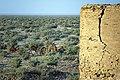 چرای گله شتر - حوالی کاروانسرای دیر گچین قم - پارک ملی کویر 12.jpg
