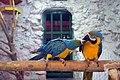 گونه های مختلف از پرنده، در باغ پرندگان شهر اصفهان - ایران 28.jpg