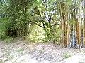 """ก่อนเป็น""""สวนสุนนท์กุล """"บ้านแก่งเค็ง - panoramio (2).jpg"""
