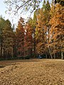 中山植物园(南园)景色17.jpg