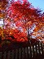 寂光院 (愛知県犬山市継鹿尾杉ノ段) - panoramio (16).jpg