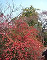 平等院 Byodoin - panoramio (7).jpg