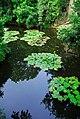 广州兰圃Scenery in Guangzhou, China - panoramio (2).jpg
