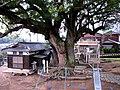旭荒神社 くすのき 7.56M 樹齢700年 天然記念物 - panoramio.jpg