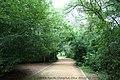 林荫小路 shady path - panoramio.jpg