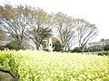 菜の花畑 - panoramio.jpg