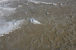 Charles I of Anjou - Salt crystals in a puddle in Camargue: salt pans at the delta of the Rhone significantly increased his revenues