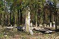 1390viki Cmentarz żydowski przy ul. Lotniczej. Foto Barbara Maliszewska.jpg