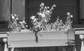 1937 SpringSt Charleston SouthCarolina USA byFBJohnston LC 03626v detail.png