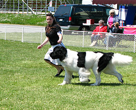 2009 Saanichton Dog Show 89.jpg