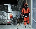 2010년 중앙119구조단 아이티 지진 국제출동100117 아이티 중앙은행 수색활동 (87).jpg