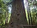 2010-07-07 Trees of Mystery CA.jpg