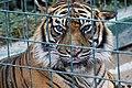 2012-09-15 Tierpark Berlin 21.jpg