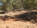 2013 - Erosion Outflow from Pedestelled Area, the Former Forked Lightning Ranch, Pecos National Historic Monument, NM - panoramio.jpg