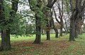 2014 Park w Tarnowie, 03.JPG