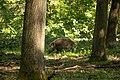 20150429 1130 Wien Lainzer Tiergarten (107265449).jpeg