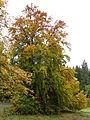 20151008 xl P1000128 Oberhof Stadt am Rennsteig und Umgebung.JPG
