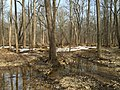 2016-02-08 12 09 04 Bottom-land swamp along Difficult Run adjacent to the Gerry Connolly Cross County Trail between Miller Heights Road and Vale Road in Oakton, Fairfax County, Virginia.jpg
