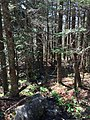 2017-05-16 11 24 38 A small stream along the Appalachian Trail on the southeast side of Mount Rogers, within the Lewis Fork Wilderness of Grayson County, Virginia.jpg