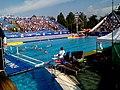 2018-as ifjúsági vízilabda-világbajnokság Hungary.jpg