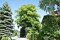 2 Sommerlinden (Kirchberg an der Pielach) 010.JPG