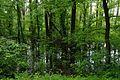 71-249-5045 Forest Lakes Cascade SAM 1342.jpg