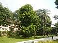 71Mehan Garden Ermita Manila Universidad de Manila 37.jpg
