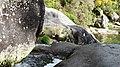 A Pobra do Caramiñal río Pedras 46.jpg