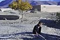 A boy sits on the side of the road during a presence patrol in the Sayed Abad district of Afghanistan Nov. 6, 2011 111106-A-VT689-020.jpg