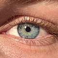 A close up of a blue-green human iris (with visible freckle)..jpg