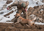 A dog's life, Mine dogs train to save lives 130108-A-GH622-068.jpg