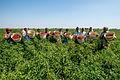 A group of Indian women farmers Karnataka Spice Value Chain Development 2015.jpg