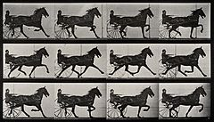 A horse drawing a chariot and driver. Photogravure after Ead Wellcome V0048751.jpg
