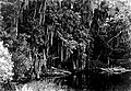 A lagoon in the Everglades -- Spanish Moss. Everglades National Park. (3c6a92ecb30a47e8a373a9225df50adb).jpg