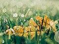 Aaron Burden 2015-07-28 (Unsplash).jpg